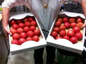 山口さんちのトマト