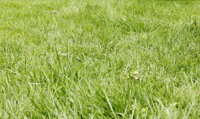 草原・草むしり