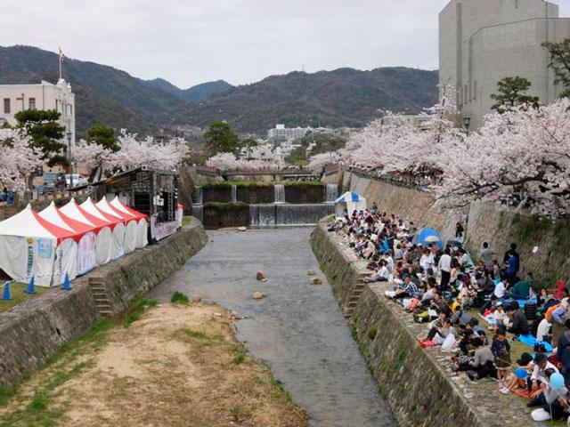 ashiya-sakura